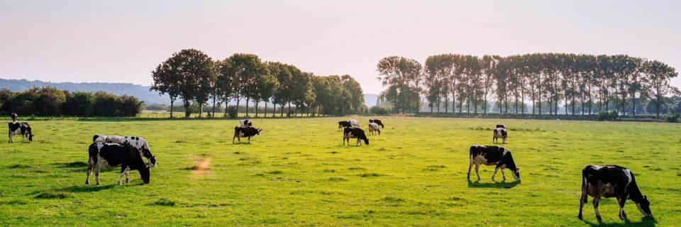 Alt fra foder til hygiejne til malkekvæg