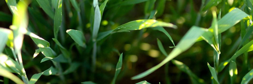 Vi tilbyder blandt andet majs- & græsfrø
